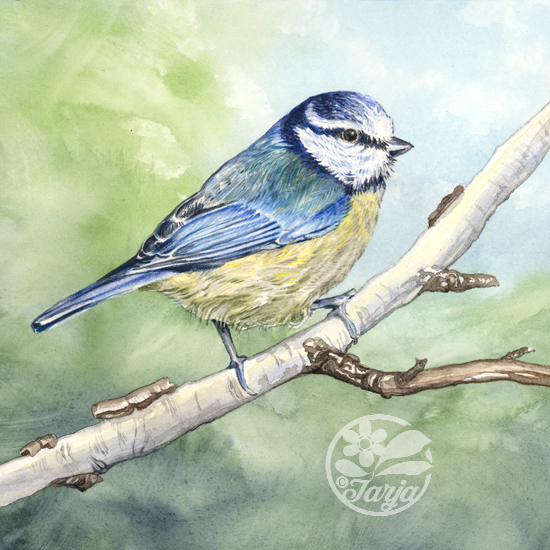 BlueTit_InProgres_Mar15