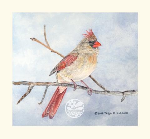 Cardinal_Scan_Oct27F_fb
