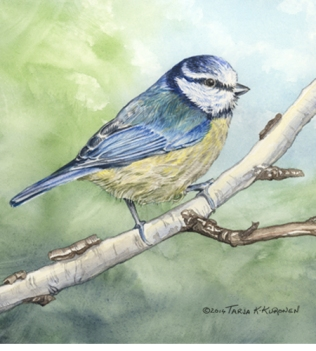 Illustrations_BlueTit_web