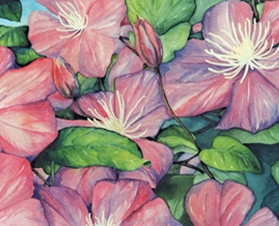 Illustrations_Clematis_web