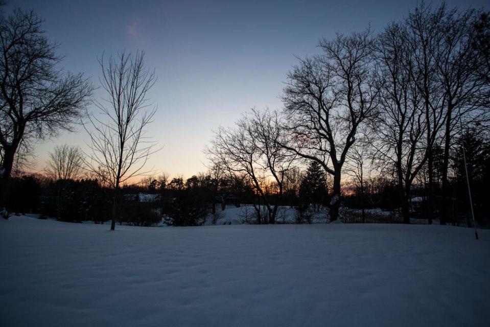 Backyard-Feb12_2018_9881