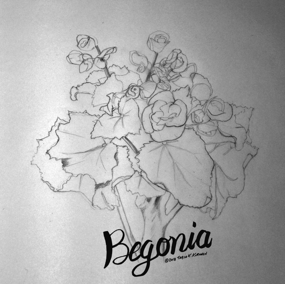 Begonia Illustration WIP