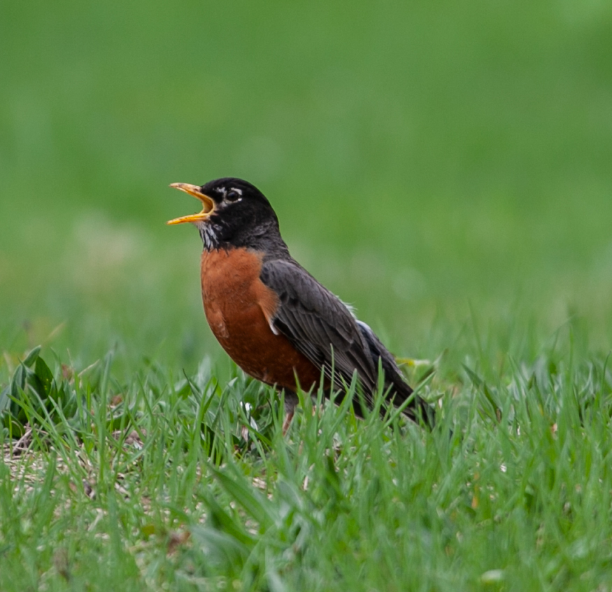 Robin-IMG_0016_web